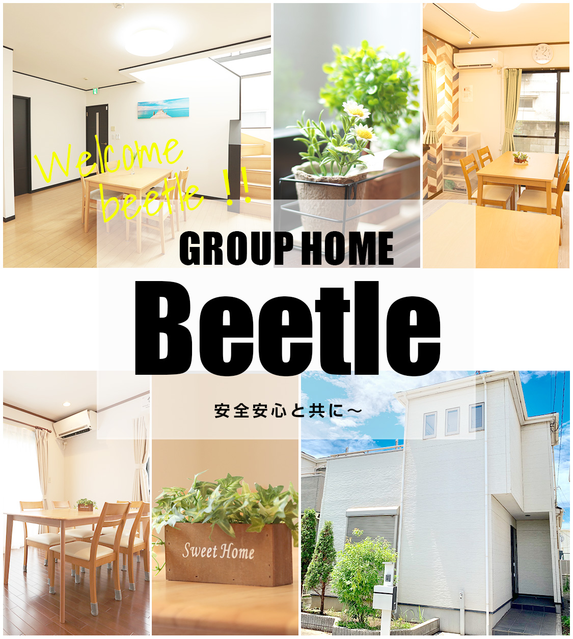 GROPHOME Beetle